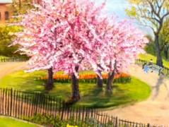 Blossom in Theodor Roosevelt Park>